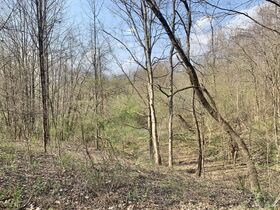 19 Acre Marion County Land featured photo 8