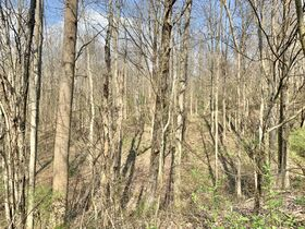 19 Acre Marion County Land featured photo 9