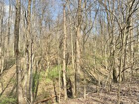 19 Acre Marion County Land featured photo 10