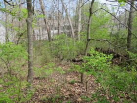 Vacant Residential Lot In Eastland Hills Subd., Sells To High Bidder, 4809 Maple Leaf Dr., Columbia, MO featured photo 6