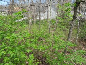 Vacant Residential Lot In Eastland Hills Subd., Sells To High Bidder, 4809 Maple Leaf Dr., Columbia, MO featured photo 7