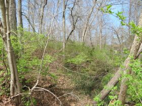 Vacant Residential Lot In Eastland Hills Subd., Sells To High Bidder, 4809 Maple Leaf Dr., Columbia, MO featured photo 8