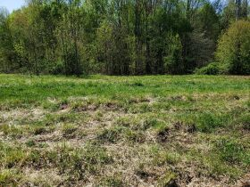 Approximately 60 Acres at Absolute Online Auction featured photo 5