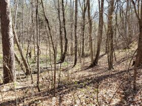 Approximately 60 Acres at Absolute Online Auction featured photo 11