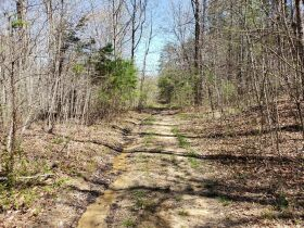 Approximately 60 Acres at Absolute Online Auction featured photo 12