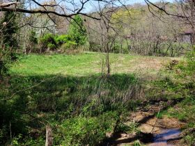 Approximately 60 Acres at Absolute Online Auction featured photo 4