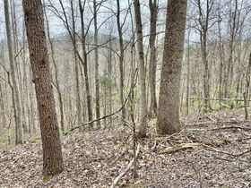 Ritchie County 2 Bedroom Home & 74 Acres featured photo 4