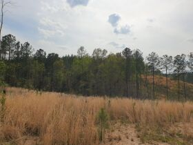 204+/- Acres in Tracts & Combinations - Recreational/Hunting/Estate Lots/Lake Community Property - Near Lay Lake - Chilton County, AL featured photo 6