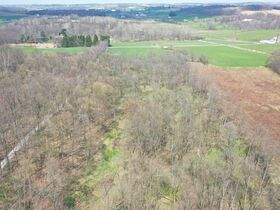 *Absolute Auction* Wooded Vacant Land Close to Winesburg featured photo 7