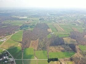 *Absolute Auction* Wooded Vacant Land Close to Winesburg featured photo 8
