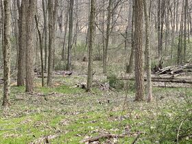 *Absolute Auction* Wooded Vacant Land Close to Winesburg featured photo 3
