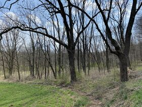 *Absolute Auction* Wooded Vacant Land Close to Winesburg featured photo 5