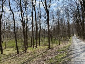 *Absolute Auction* Wooded Vacant Land Close to Winesburg featured photo 6