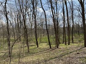 *Absolute Auction* Wooded Vacant Land Close to Winesburg featured photo 4