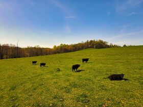 378.4 Acres in 9 Parcels – Tuscarawas County featured photo 12