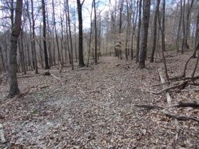 66.242 ACRES - MARKETABLE TIMBER - SOLD IN 9 PARCELS - Online Bidding Only Ends Wed., May 26 @ 3:00 PM CDT featured photo 9