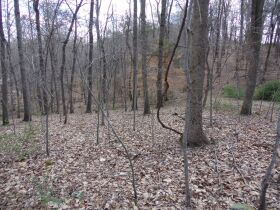 66.242 ACRES - MARKETABLE TIMBER - SOLD IN 9 PARCELS - Online Bidding Only Ends Wed., May 26 @ 3:00 PM CDT featured photo 11