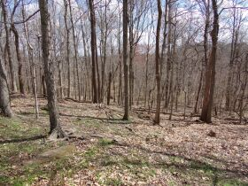 66.242 ACRES - MARKETABLE TIMBER - SOLD IN 9 PARCELS - Online Bidding Only Ends Wed., May 26 @ 3:00 PM CDT featured photo 12