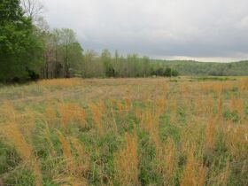 78.989 ACRES SELLING IN 3 PARCELS - Online Bidding Only Ends Monday, May 17th @ 3:00 PM CDT featured photo 6