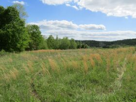 78.989 ACRES SELLING IN 3 PARCELS - Online Bidding Only Ends Monday, May 17th @ 3:00 PM CDT featured photo 7