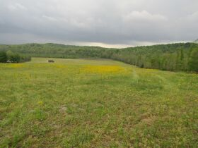 78.989 ACRES SELLING IN 3 PARCELS - Online Bidding Only Ends Monday, May 17th @ 3:00 PM CDT featured photo 9
