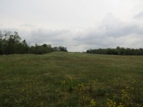 78.989 ACRES SELLING IN 3 PARCELS - Online Bidding Only Ends Monday, May 17th @ 3:00 PM CDT featured photo 10