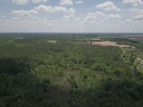 300± Acres | Excellent Crop & Timberland featured photo 8