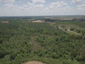 300± Acres | Excellent Crop & Timberland featured photo 12