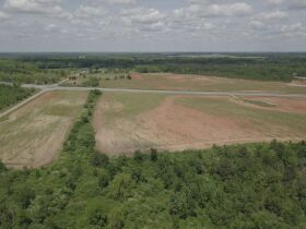 300± Acres | Excellent Crop & Timberland featured photo 6
