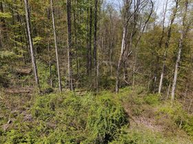 85+ Wooded Guernsey County Acres featured photo 12