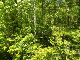 100 +/- Acres Bledsoe Co. TN - Online Only Auction featured photo 2