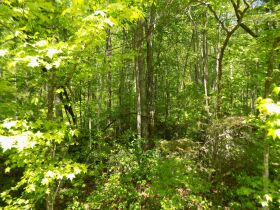 100 +/- Acres Bledsoe Co. TN - Online Only Auction featured photo 3