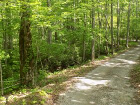 100 +/- Acres Bledsoe Co. TN - Online Only Auction featured photo 8