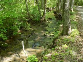 100 +/- Acres Bledsoe Co. TN - Online Only Auction featured photo 1