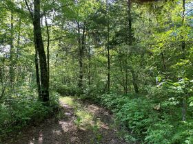 17.17+/- Acres in Rockvale - Soil Site & Utilities Available - Auction June 17th featured photo 5
