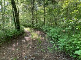 17.17+/- Acres in Rockvale - Soil Site & Utilities Available - Auction June 17th featured photo 4