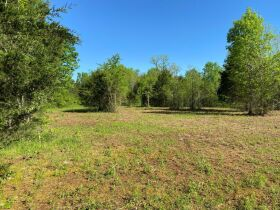 17.17+/- Acres in Rockvale - Soil Site & Utilities Available - Auction June 17th featured photo 6