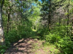 17.17+/- Acres in Rockvale - Soil Site & Utilities Available - Auction June 17th featured photo 7