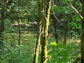 17.17+/- Acres in Rockvale - Soil Site & Utilities Available - Auction June 17th featured photo 8