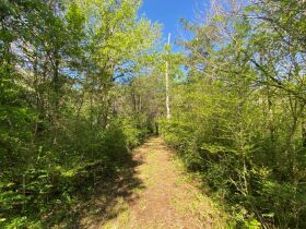 17.17+/- Acres in Rockvale - Soil Site & Utilities Available - Auction June 17th featured photo 9