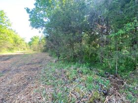 17.17+/- Acres in Rockvale - Soil Site & Utilities Available - Auction June 17th featured photo 11