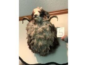 From Africa to America Taxidermy Mounts 21-0529.OL featured photo 6
