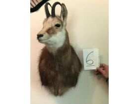 From Africa to America Taxidermy Mounts 21-0529.OL featured photo 7