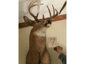 From Africa to America Taxidermy Mounts 21-0529.OL featured photo 8
