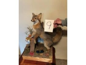 From Africa to America Taxidermy Mounts 21-0529.OL featured photo 10