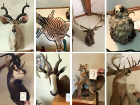 From Africa to America Taxidermy Mounts 21-0529.OL featured photo 1