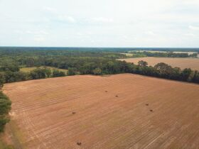 121± Acres | Gaskins Estate featured photo 3