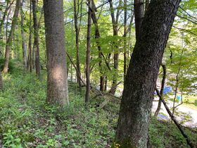 Absolute 25 Acres Braxton County Land featured photo 3