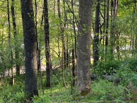 Absolute 25 Acres Braxton County Land featured photo 4