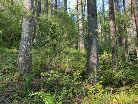 Absolute 25 Acres Braxton County Land featured photo 5